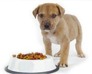 A kutyát etetni, sétáltatni, ápolni kell.