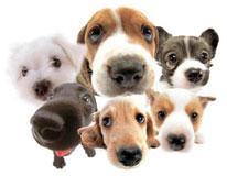 Milyen fajtájú kutyát válasszunk?