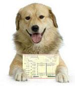 Aki fajtatiszta kutyát szeretne, annak a törzskönyvezett kutyákat javaslom.